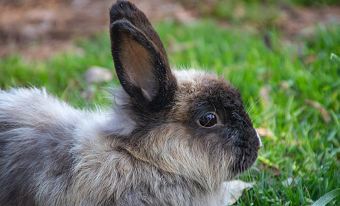 Rabbit Care & Advice