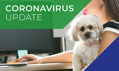 Corona Virus Update Poster with a little white dog on it