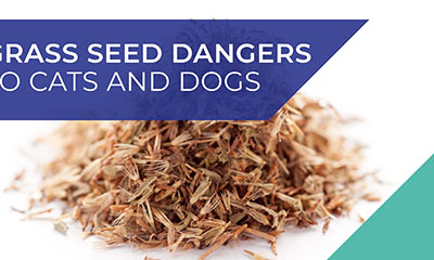 Grass seed dangers to cats and dogs poster