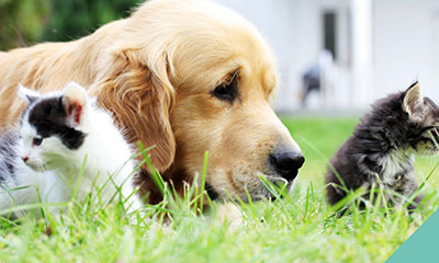 A dog and two kittens lying in the grass