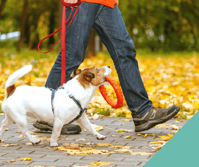 Autumn walks with your dog