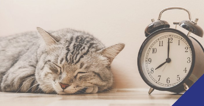A grey cat snoozing by a clock