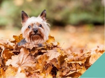 A dog playing in the leaves