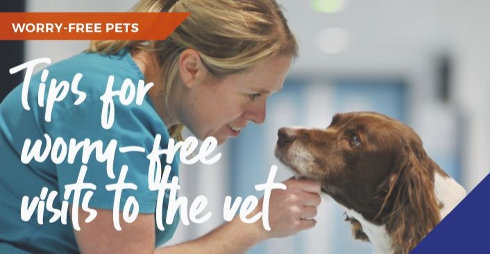A vet and a dog